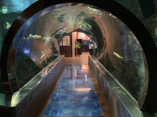 道の駅みなかみ水紀行館@群馬【淡水魚と化石を学ぶ】