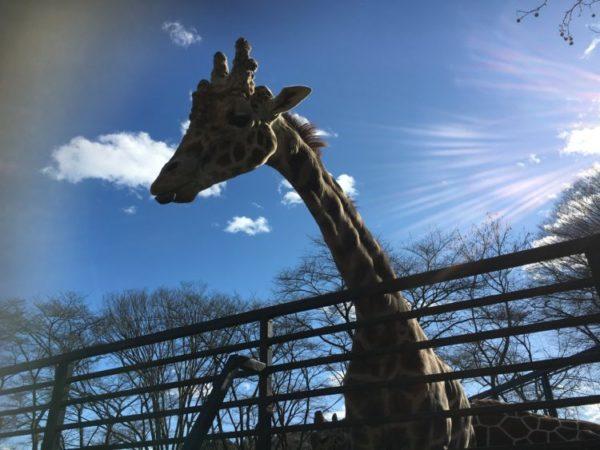 宇都宮動物園@栃木【愛に溢れる餌あげ体験】