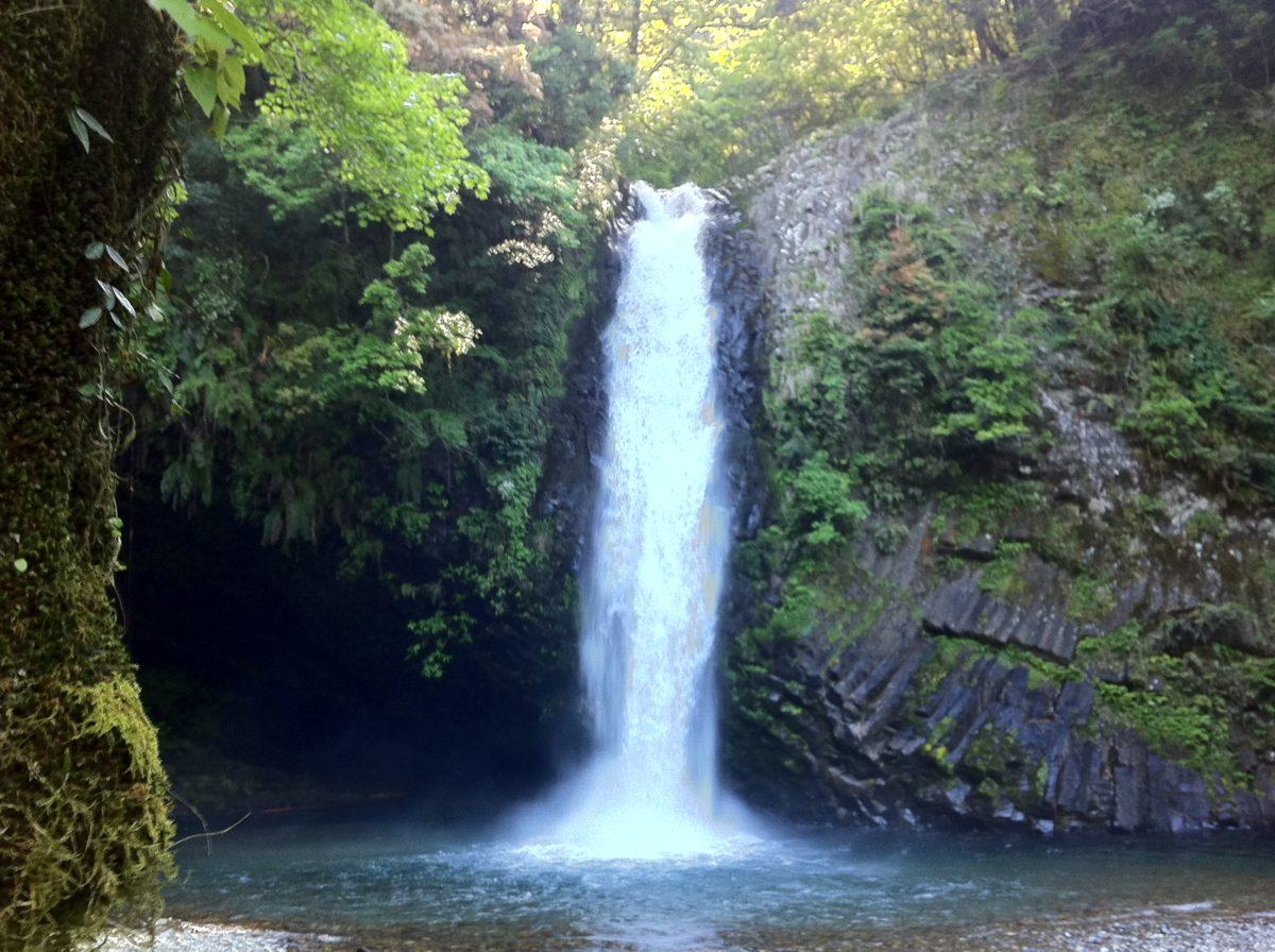 天城越え常連の滝